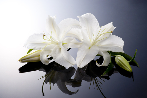 white flowers on reflective surface