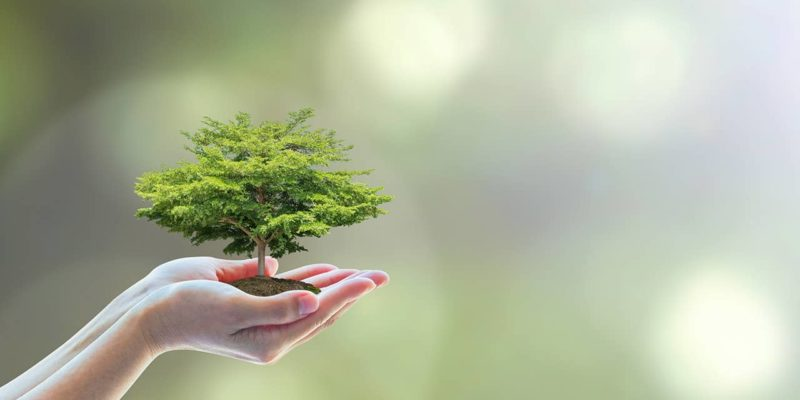 graphic of childs hands holding miniature tree